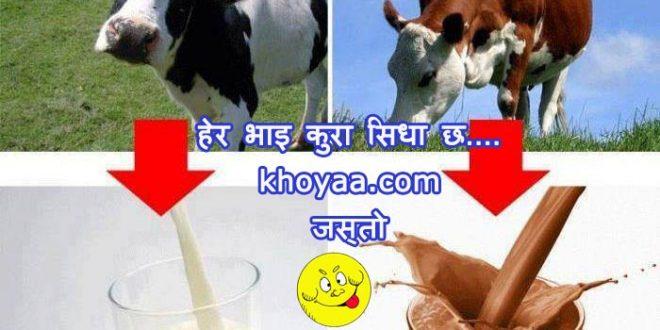 White Cow - white milk, Brown cow - chocolate shake